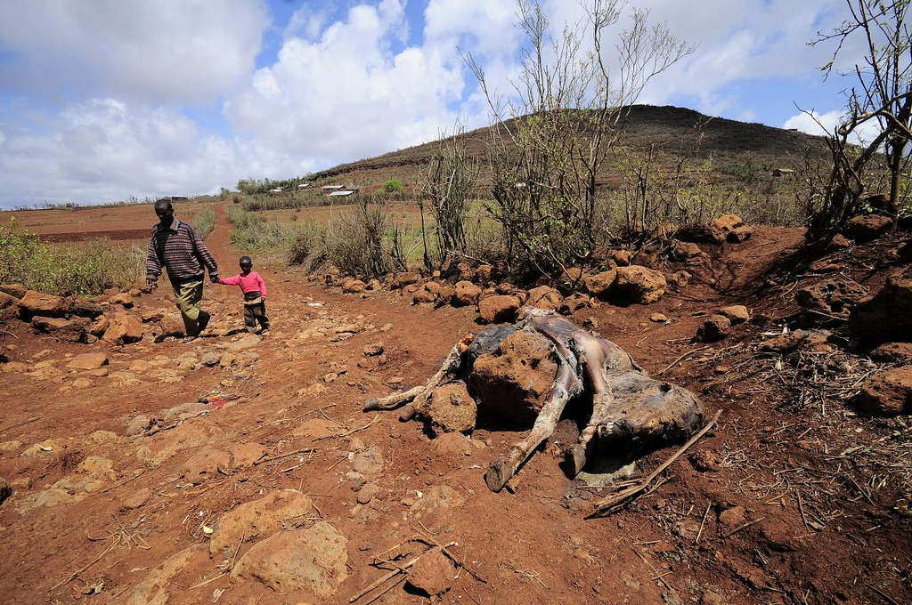 A livestock carcass in Marsabit, in Northern Kenya, which suffered prolonged drought, 2010. (Neil Palmer with CIAT via Flickr)